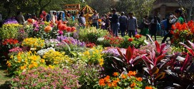 30th Garden Tourism Festival at Garden of Five Senses from February 17 to 19